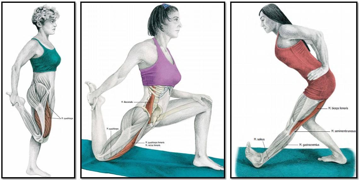 Упражнения для передней поверхности бедра: примеры для зала и дома, техника выполнения для девушек