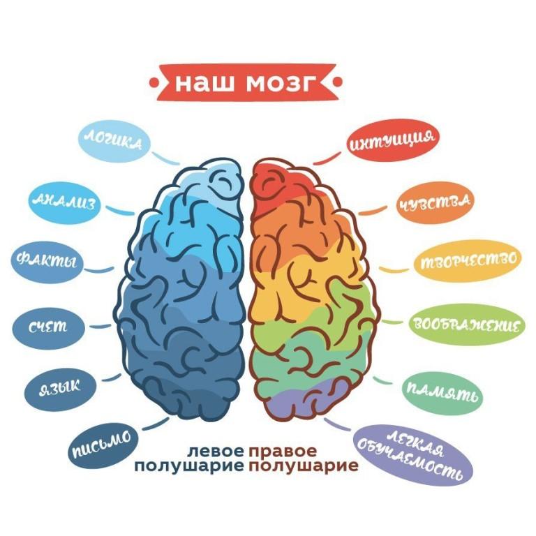 Связь мозг-мышцы