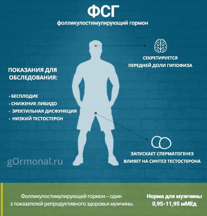 Продукты для повышения тестостерона у мужчин и женщин