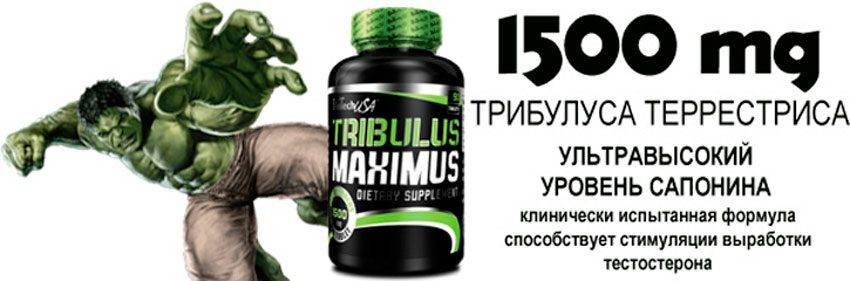 Трибулус Террестрис, растение для мужчин
