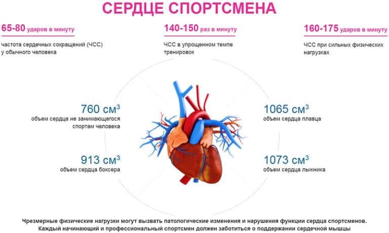 Польза кардиотренировок или вред: что дают тренировки, полезно ли кардио и в чем, плюсы и минусы