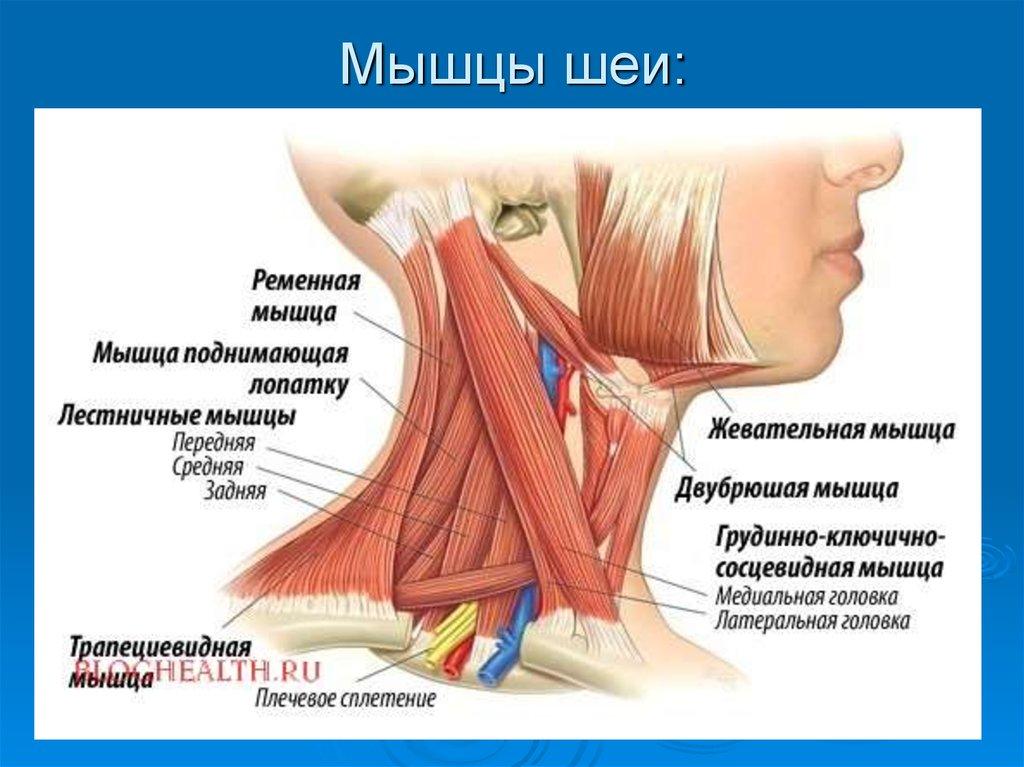 Точечный массаж при головной боли: 7 эффективных точек от боли