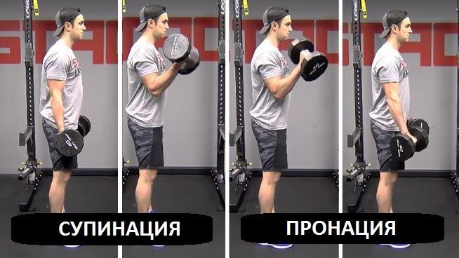 Сгибания зоттмана — активируем плечелучевую мышцу