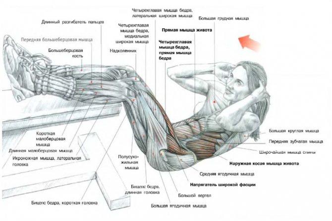 Подъем ног сидя (складка): техника выполнения. упражнение для пресса