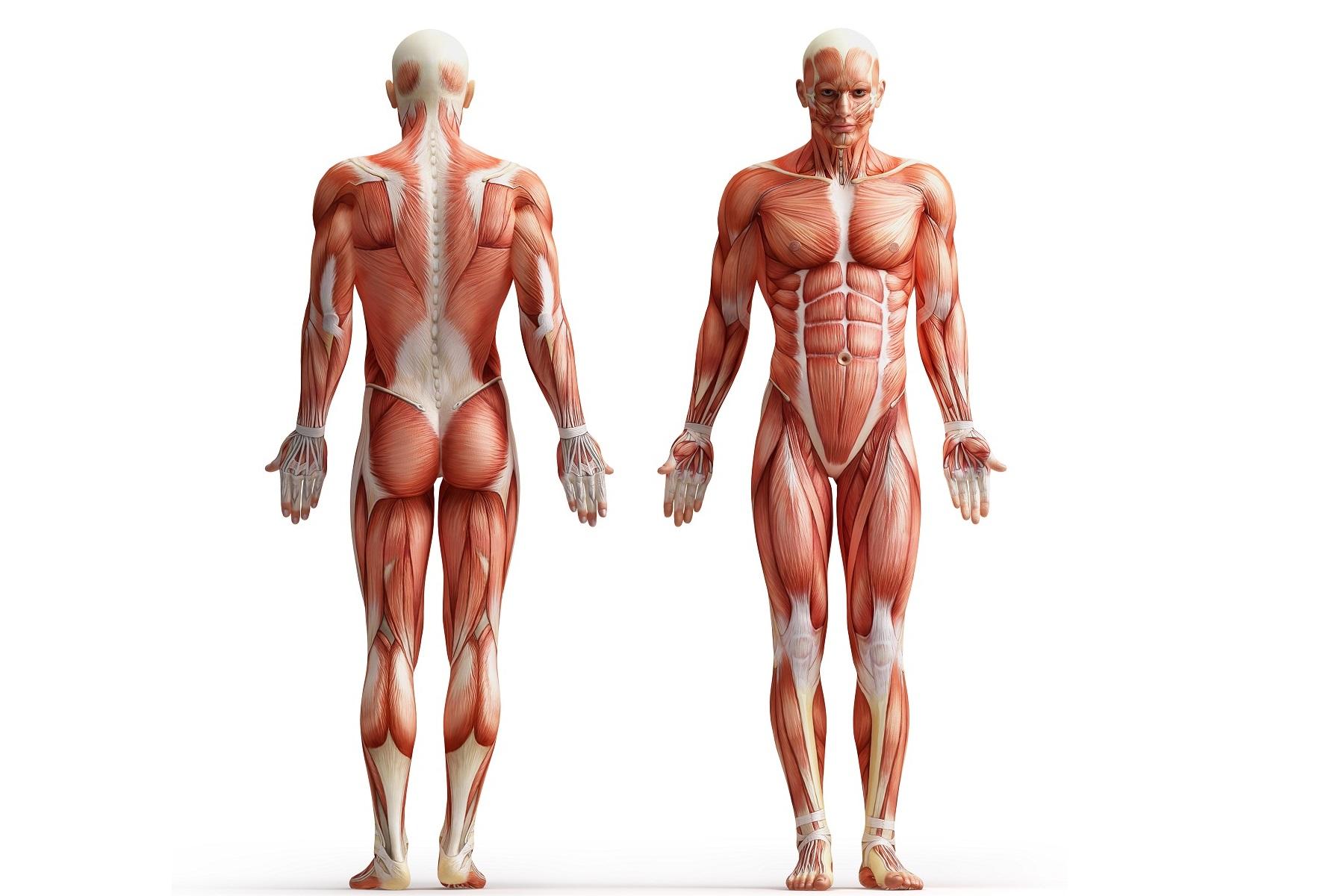 Человек стареет ногами: тренируйте периферические сердца