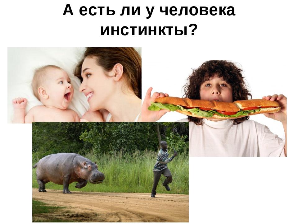 Разум животных. есть ли у зверей язык и мышление?