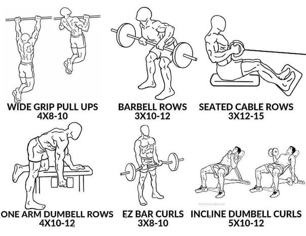 Тренировка груди и спины в один день, программа тренировки