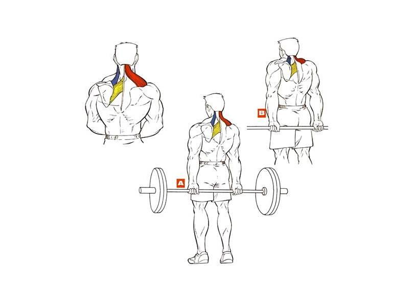 Шраги: техника выполнения упражнения со штангой, гантелями и на брусьях