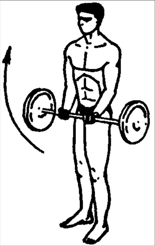 Тренировка связок и сухожилий: упражнения засса, изометрические упражнения, статика, динамика, дыхательная гимнастика и другие методики тренировки связок и сухожилий