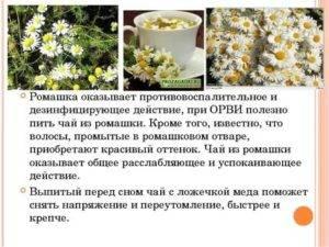 Какова польза от ромашкового чая и возможен ли вред от его применения - рецепты для взрослых и детей, противопоказания и отзывы