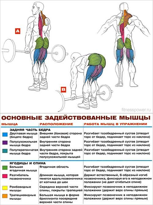 Упражнения для бедер в домашних условиях: работаем с четырехглавой и прочими мышцами конечностей дома