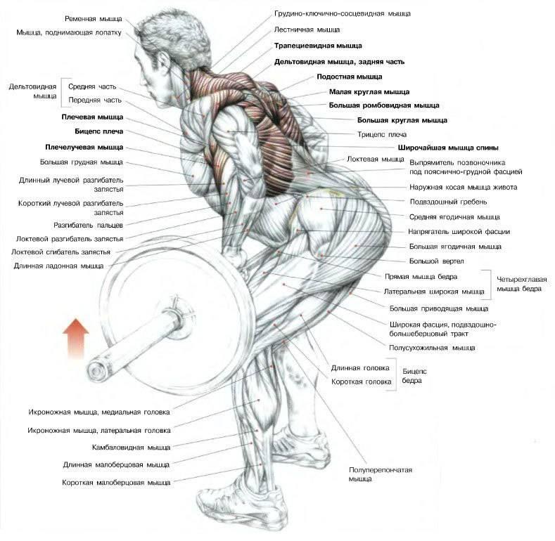 Становая тяга на прямых ногах «мертвая тяга»