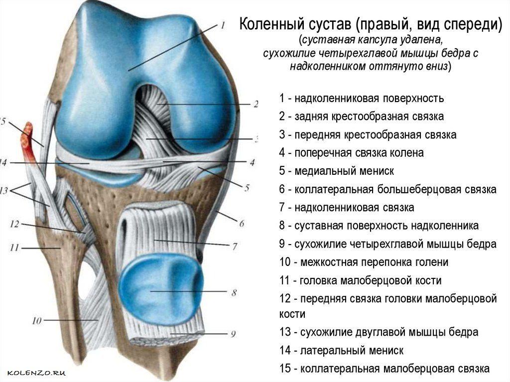 Как укрепить коленные суставы и связки: упражнения, диета, образ жизни