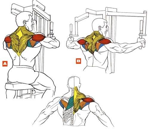 Эффективные упражнения на передние дельты
