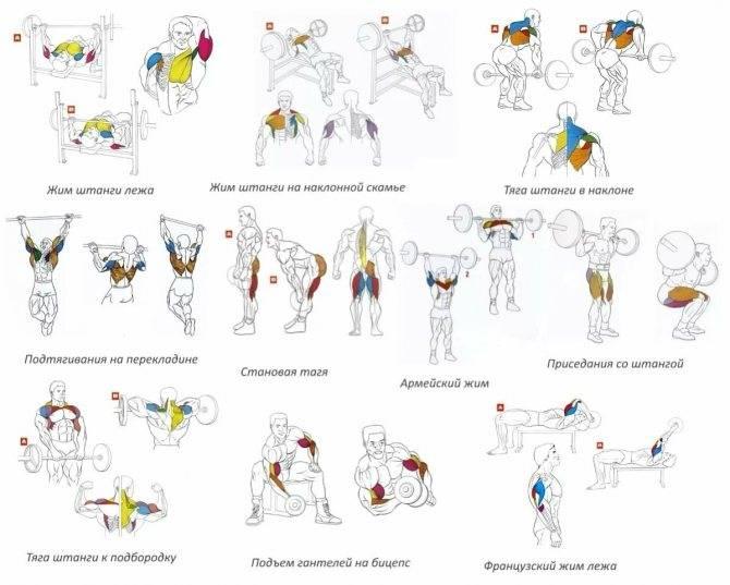 Топ-5 упражнений на плечи со штангой для дома и зала