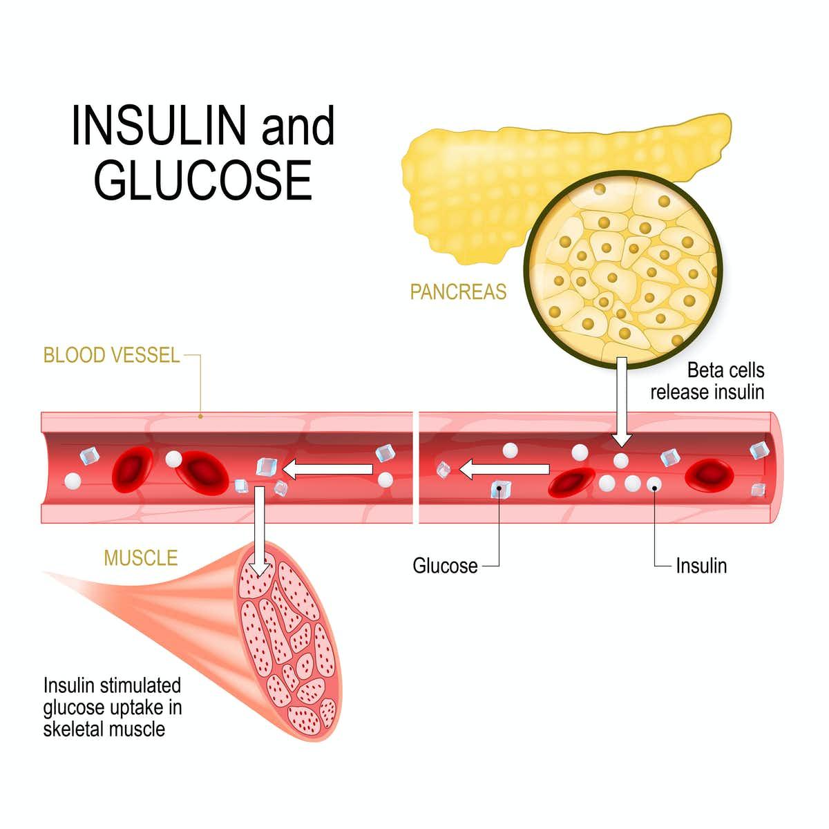 8 способов повысить чувствительность к инсулину