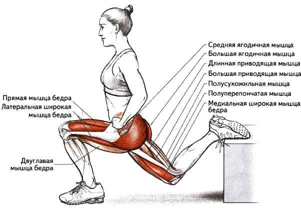 Болгарские выпады с гантелями или штангой, техника выполнения