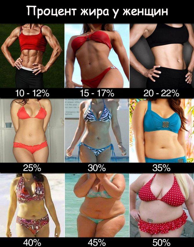 Как измерить процент жира в организме – зожник  как измерить процент жира в организме – зожник