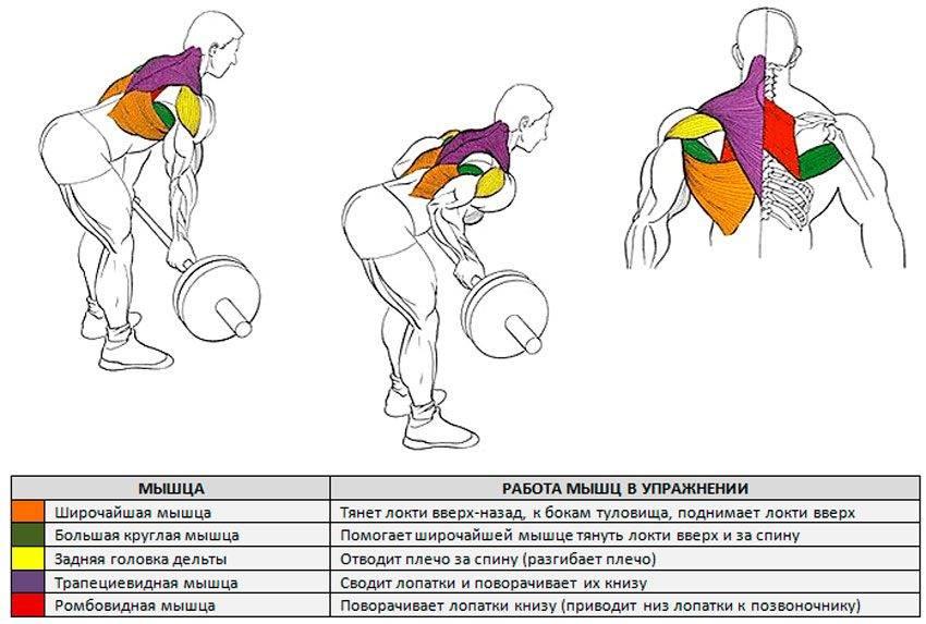 Тяга штанги к подбородку стоя: техника выполнения, какие мышцы работают