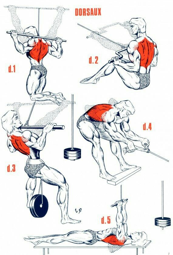 Как девушке дома накачать мышцы спины