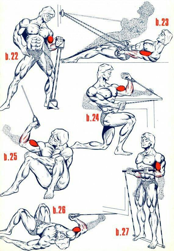 Подполье 124. принцип «пирамиды» для роста мышц