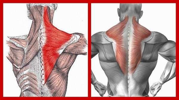 Хотите избавиться от болей в спине? регулярно выполняйте упражнения для растягивания позвоночника