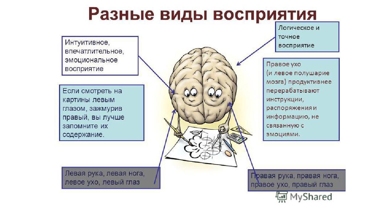 Связь мозг-мышцы. качаемся правильно.
