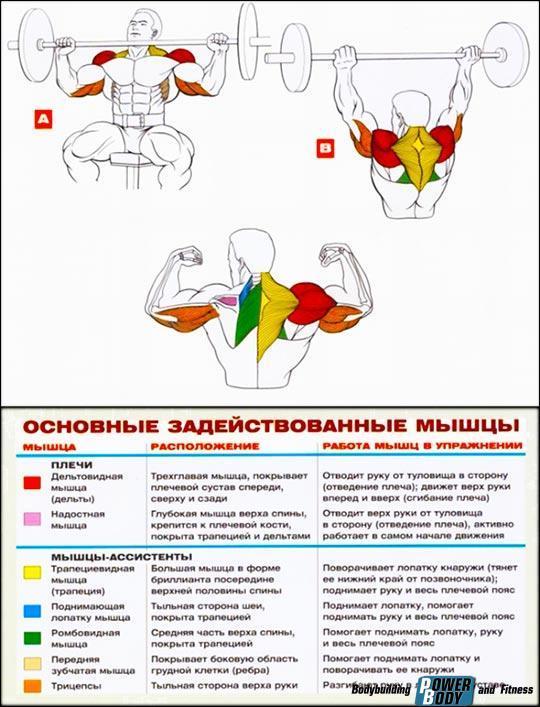Вертикальная тяга в тренажере хаммере. тяга в хаммере на спину как выполнять