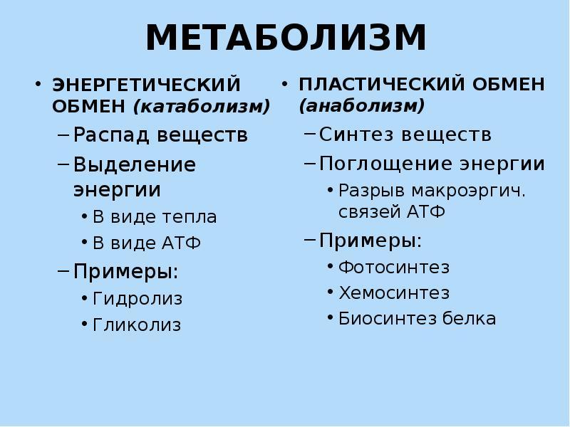 Анаболизм мышц