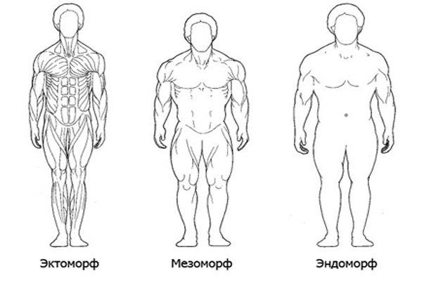 3 типа телосложения