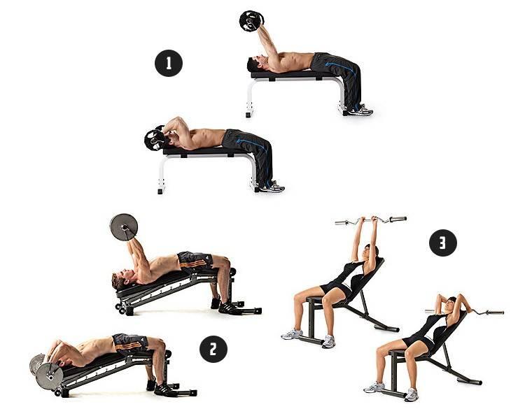 Техника выполнения французского жима, какие мышцы работают при правильном выполнении французского жима штанги