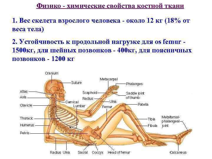 Широкая кость: миф или реальность