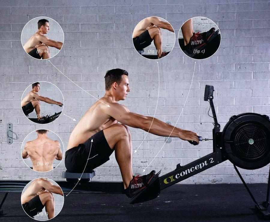 Гребной тренажер - какие мышцы работают, техника выполнения