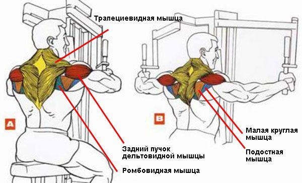 Как быстро сделать тело рельефным: сжигаем максимум жира за 2 недели