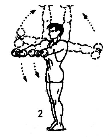 Лучшие упражнения с гантелями: базовые упражнения и нагрузка всех групп мышц. 105 фото и советы по выбору веса