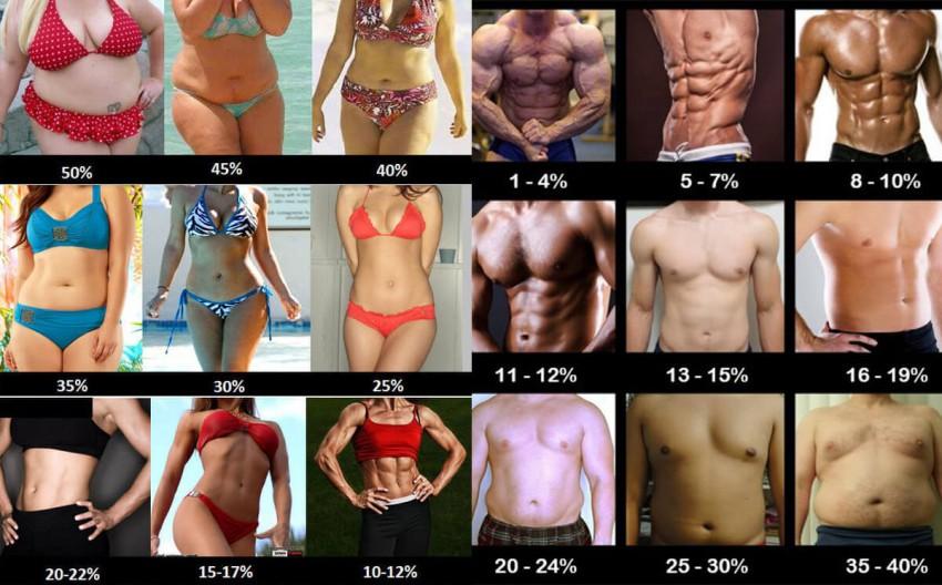 Процент жира в организме: как узнать, фото примеры