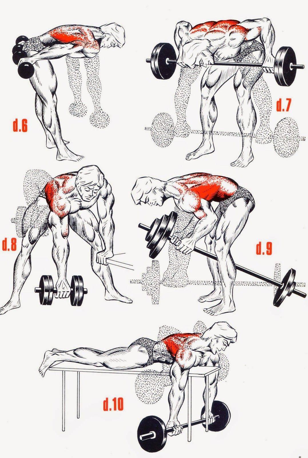 Как накачать мышцы спины дома без тренажеров