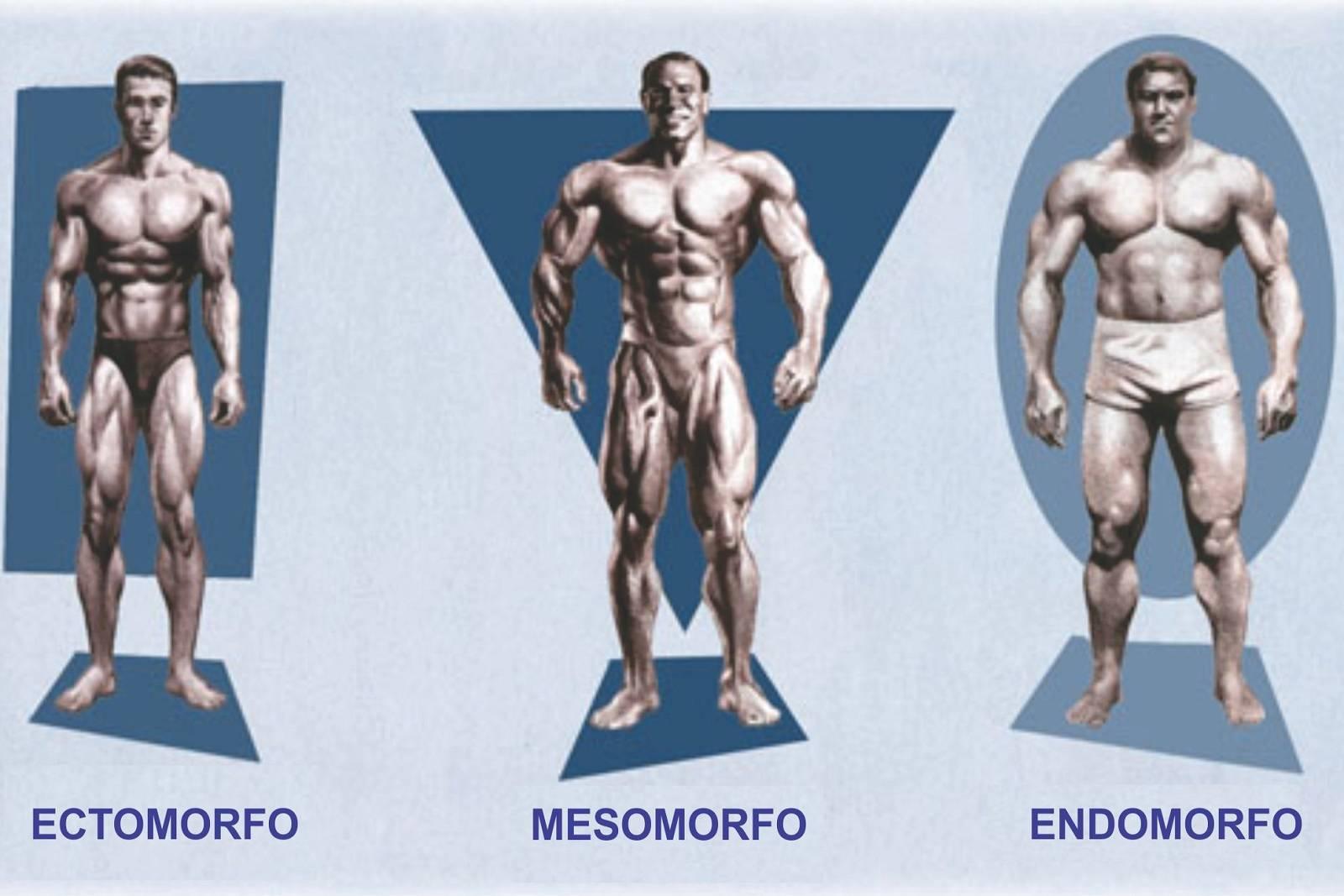 В чем особенности тренировок для эндоморфа?
