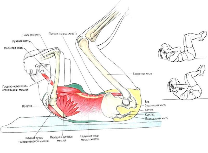 Косые скручивания: какие мышцы работают, варианты диагональных и перекрестных кранч лежа на полу