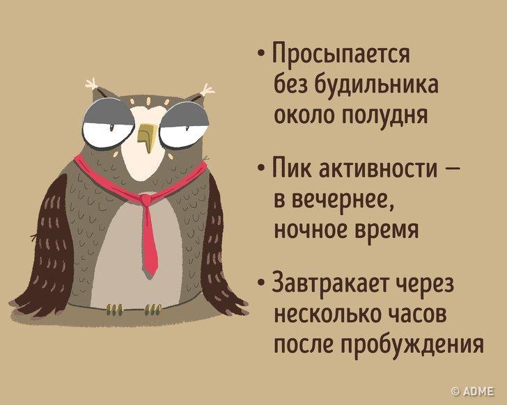 Ученые рассказали, как за три недели из «совы» превратиться в «жаворонка» - hi-news.ru