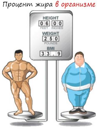Правильное питание в бодибилдинге, базовый рацион бодибилдера