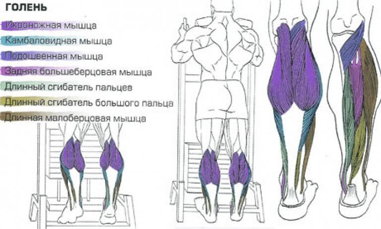 Подъем на носки с гантелями: описание упражнения с фото, пошаговая инструкция выполнения, проработка мышц ног