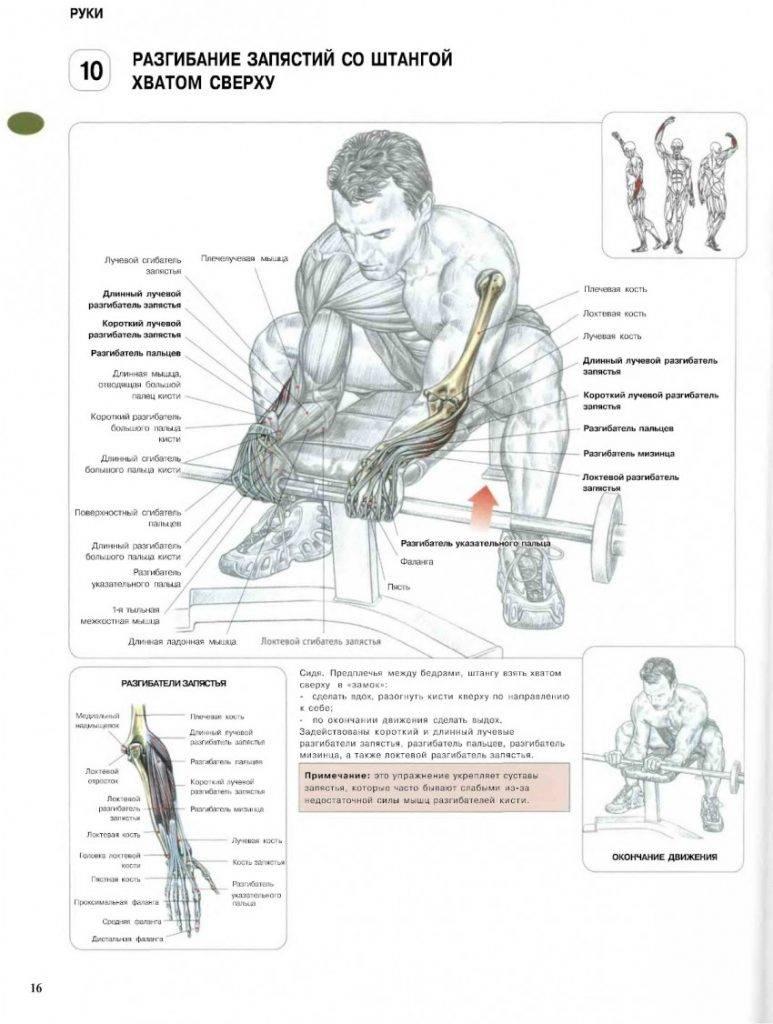 Лучшие и эффективные упражнения для рук — sportfito — сайт о спорте и здоровом образе жизни