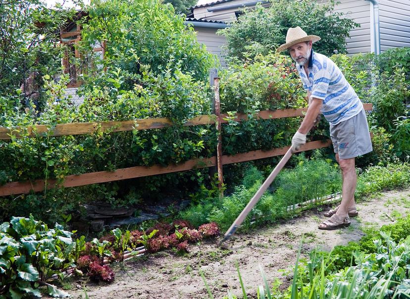Первая грядка начинающего огородника – советы новичкам   на грядке (огород.ru)