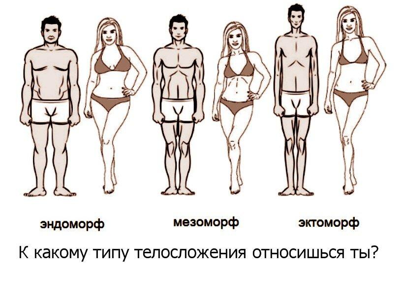 Типы телосложения – эктоморф, эндоморф, мезоморф