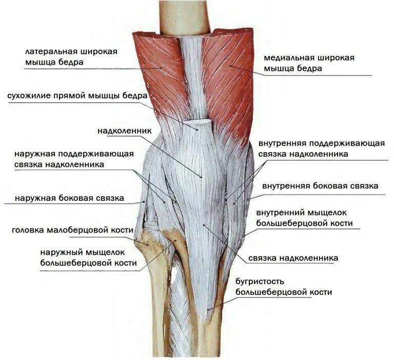 Как укрепить связки коленного сустава: упражнения, правильное питание и анатомическое строение колена