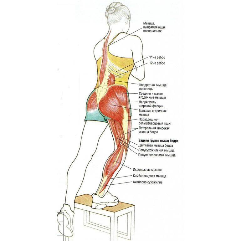 Ягодичный мостик: техника выполнения, какие мышцы работают, а также как правильно делать подъем таза (попы) со штангой, в смите, с блином