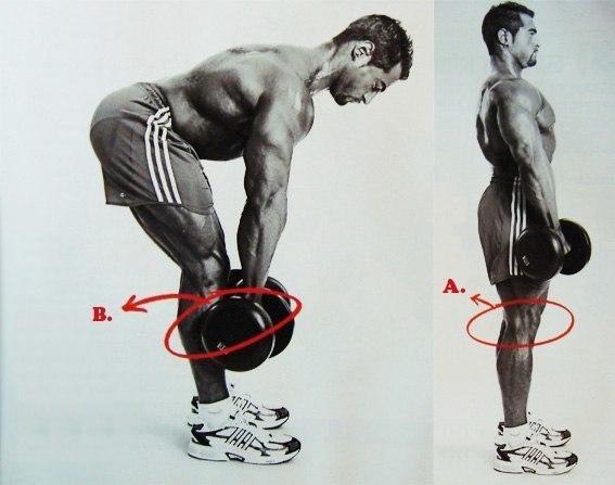 """Описание упражнения """"подъемы на носки сидя"""": интересные факты, ошибки, правильная техника, виде"""