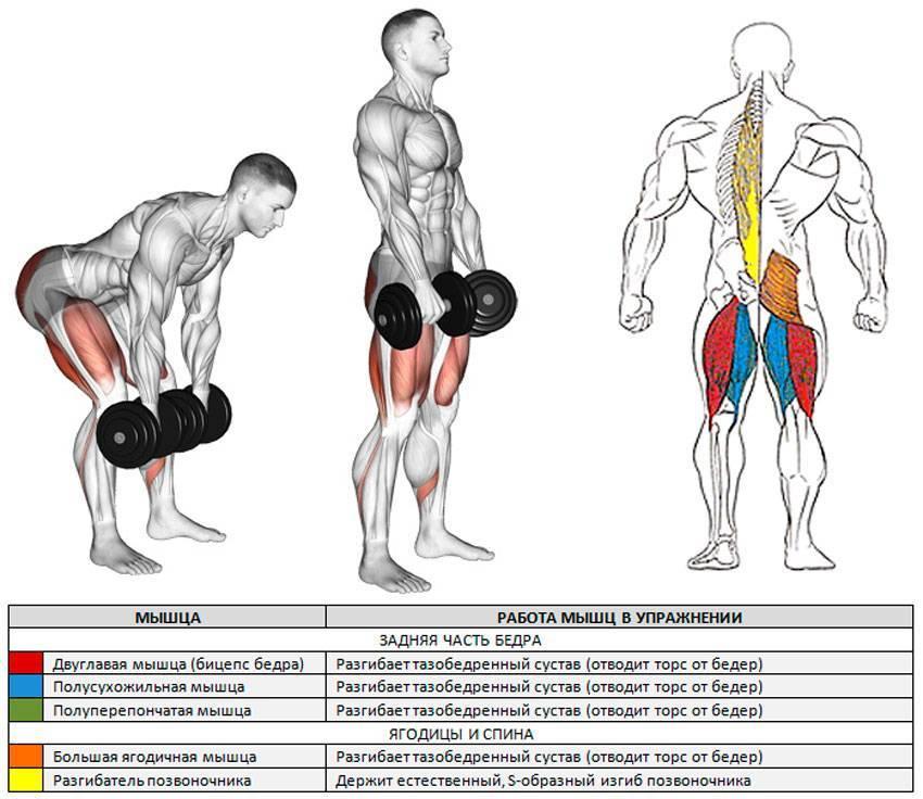 Становая тяга: польза и техника выполнения | rulebody.ru — правила тела