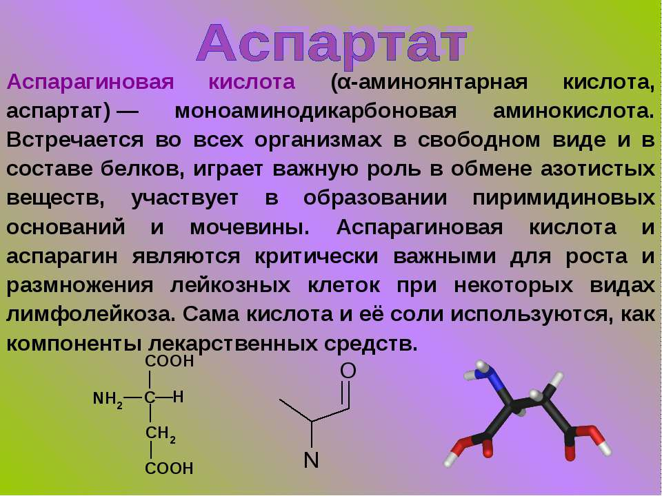 Аспарагиновая кислота и аспарагин: функции, биосинтез